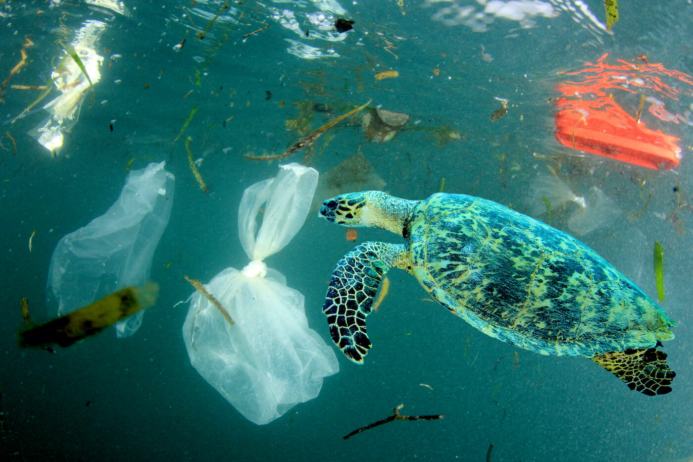 増え続ける海洋ごみ】今さら聞けない海洋ごみ問題。私たちに何ができる ...